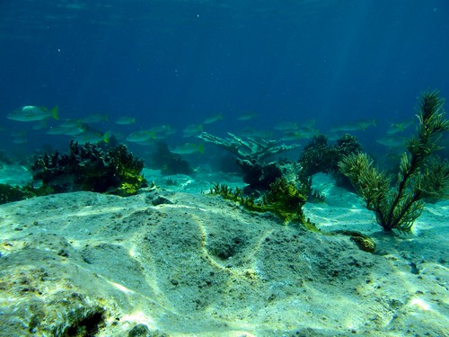 largest Bahamian Island