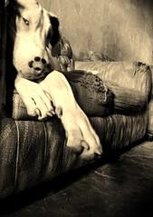 Let me In (Alex Velazquez) Tags: new blue wedding light sky food dog blanco luz water colors azul canon landscape mexico lights luces agua photos kodak aztec retrato comida negro boda paisaje colores bn perro cielo dslr puebla mx fondo nuevas grillo azteca aztecas