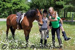 Live, Laugh, Love (GilbankProductions) Tags: horses horse farm riding horseback horsebackriding horseshows morgans girlriding farmhorses