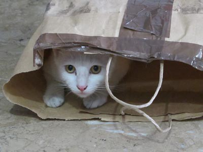 cat in bag