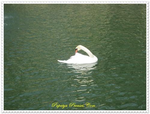 emirgan2011 079