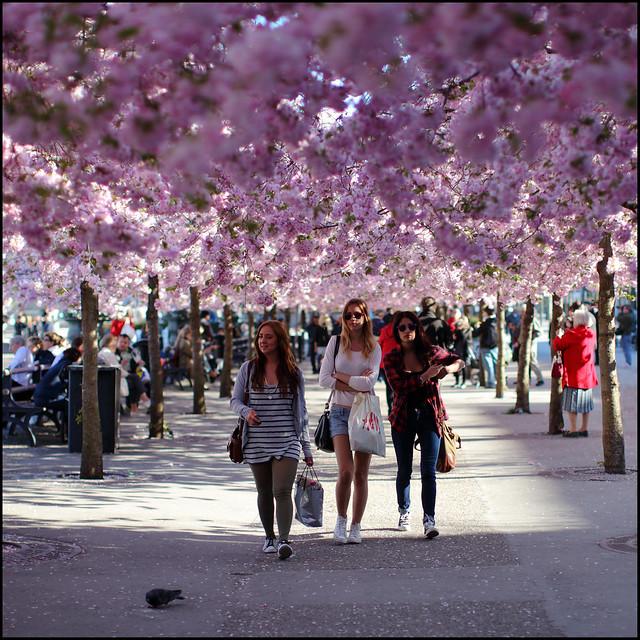 Sakura babes