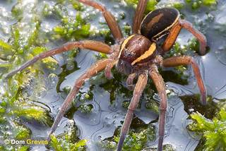 Raft Spider Tension