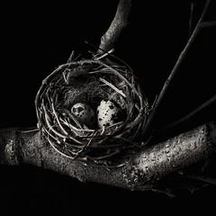 birds nest (kevsyd) Tags: 645d kevinbest