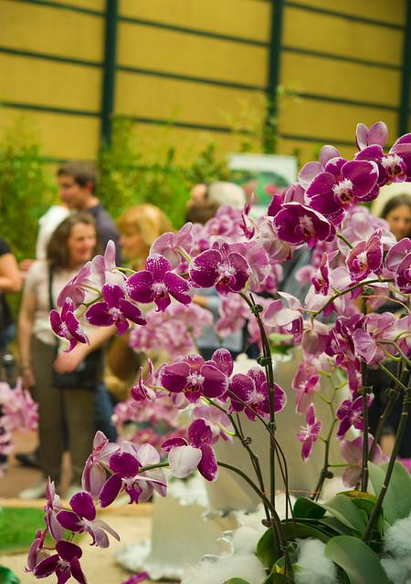 Цветочная выставка в Генуе 11