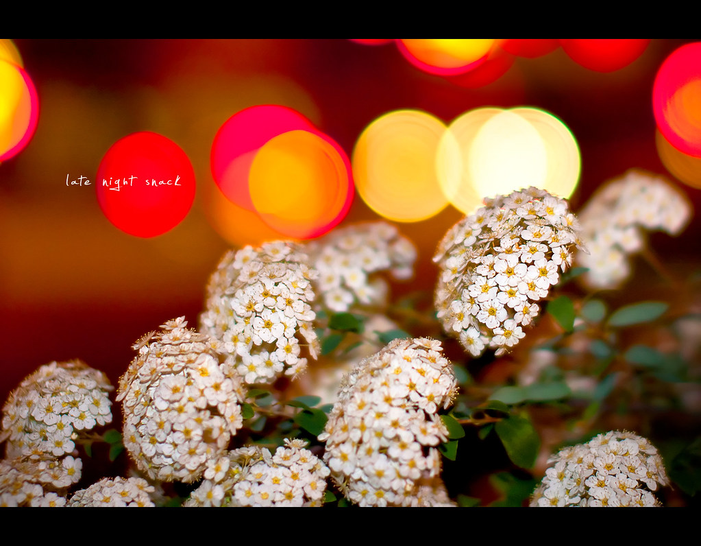 Project 365, 274/365, Day 274, bokeh, flowers, colours, nightshot, Sigma 50mm F1.4 EX DG HSM, 50mm,