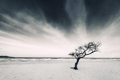 Infinite (Philipp Klinger Photography) Tags: sea sky blackandwhite bw mer white mountain plant black tree beach nature water weather clouds landscape dead island mar blackwhite spain sand nikon meer mediterranean mare waves branch loneliness angle branches horizon hill wide roots trails wave wideangle insel espana deadtree lone and lonely sa root mallorca philipp ultra islas cala spanien mediterraneansea coma lonetree lonelytree majorca baleares balearen espanya balears klinger illesbalears majorka inseln mittelmeer millor ultrawideangle islasbaleares illes sacoma balearischeinseln d700 puntadenamer balearische