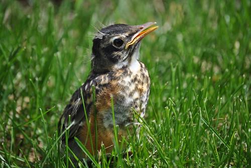 wee bird 012