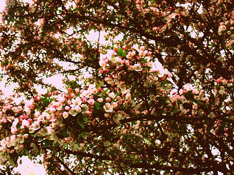 bloomsfromyard2-0511