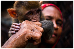 The Little man [..Dhaka, Bangladesh..] (Catch the dream) Tags: woman look animal monkey hands fingers evolution domestic similar fist ape dhaka domesticanimals primate bangladesh apeman slum humans similarity slumdwellers gettyimagesbangladeshq2 closetohuman domesticmonkey