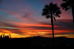 backyard view (ranchodon) Tags: colorphotoaward