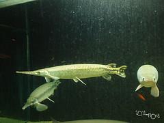 20110602酷節能體驗營 (79) (fifi_chiang) Tags: zoo taiwan olympus taipei ep1 木柵動物園 17mm 環保局 酷節能體驗營