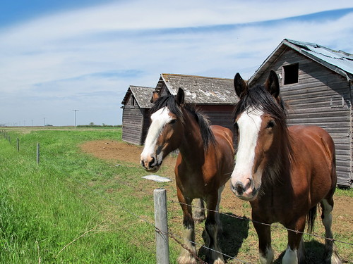 Two horses and old grain storage