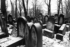 krakow#07 (G.Pommier) Tags: cemetery canon poland polska krakow jewish kazimierz cracovia cracovie pologne s95