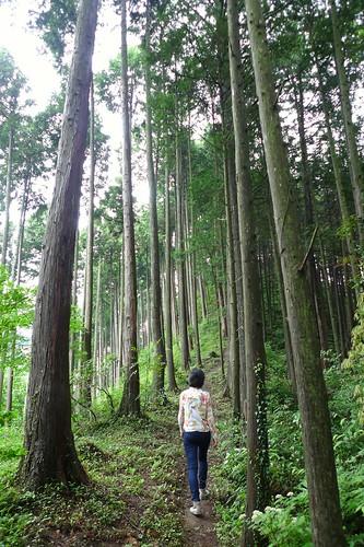 裏山の杉林。