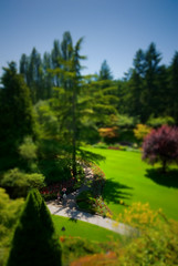Sunken Garden From The Center - Tilt Shift (Keith Watson Photography) Tags: gardens vancouver island bc britishcolumbia shift tilt hdr butchart fliwers volume5 93793499n00