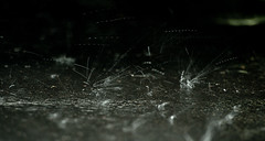 175:365 - Rain drops (alexv1n) Tags: rain drops pavement ground streaks