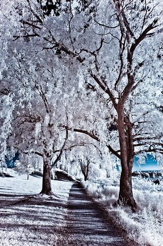 フリー写真素材, 自然・風景, 樹木, 道, 赤外線写真,