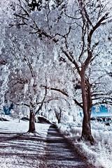 [フリー画像] 自然・風景, 樹木, 道, 赤外線写真, 201107021900