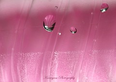 Looks familiar ?! ( Kaaviyam Photography) Tags: pink color art reflections photography this is droplets pretty guess abstractart magic what doyouseewhatisee sooc bokehs kaaviyam haveyouseenthisbefore