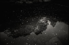 Pond of Stillness (LOVEducation) Tags: flower monochrome pond bible flakes stillness ricoh gr1v psalm4610 momentswithgod