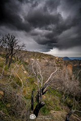 Narrow Neck Storm Cloud_.jpg (Gary Hayes) Tags: australia sunsrisesunset landscape cloudscapes newsouthwales bluemountains