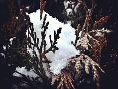 12407402_1701188246792476_1315481804_n (dragica_basaric) Tags: winter snow wonderland magic magical snowy flake nature green colours streets treet postcar postcards love train phot january 03 2016 photo photography d b danchy92 dragicabasaric lapovo serbia srbija srb sumadija dbphotography