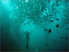 Sipadan, Malaysia. 2016 (Yuriy Sanin) Tags: sipadan malaysia 2016 underwater fish diver   handsup  flippers fins water yuriy sanin panasoniclumics boxed digital