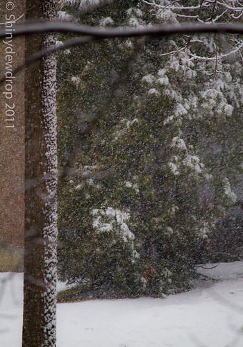 Snowy Impressions