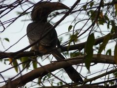 P1150642 (babsybou) Tags: travel india birds silent watching kerala du valley yatra sud inde attapadi birdswatching babsybou malleeshwaramjunglelodge pettickal