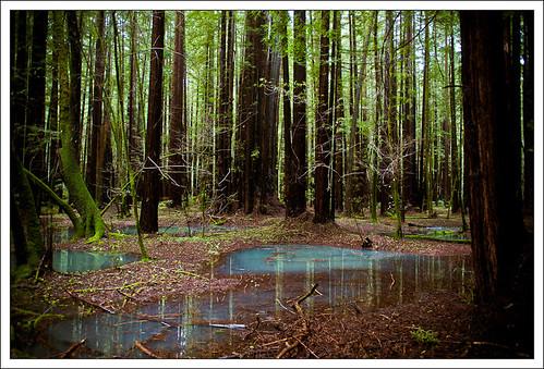 RedwoodSabbath-2492.jpg