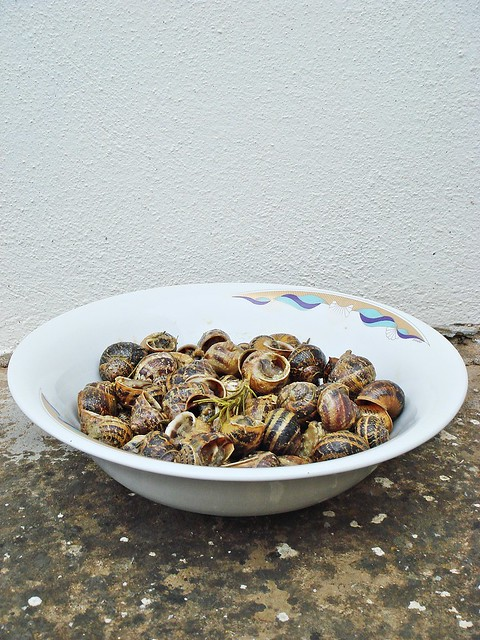 Snails from Crete
