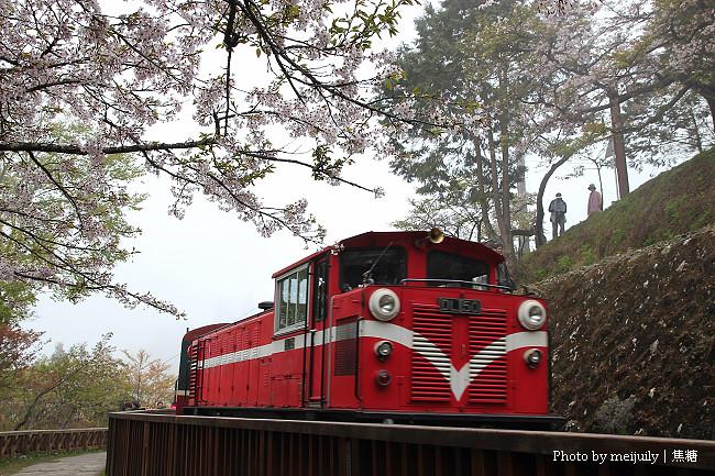 阿里山櫻花季陰天版14