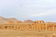 Syria,Palmyra,  348 (tango-) Tags: day cloudy syria palmira siria سوريا romanruins damasco دمشق تدمر сирия 叙利亚 дамаск सीरिया tiberiofrascari 敘利亞大馬士革 दमिश्क rovineromaneinsiria