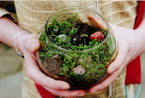 Nicks Terrarium