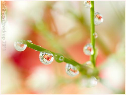 Droplets1