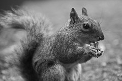 squirrel (el_mo) Tags: park parco london animals squirrel palace londra animale stjames scoiattolo buckingam