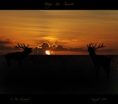 Stags & Sunsets.