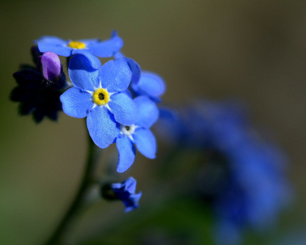 Forget me ...?