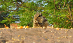 squirrel date #9 (parth joshi) Tags: dawn cycling child squirrell muses desolate mehrauli monumentsindelhi bhattimines adamkhanstomb