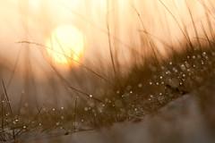 Zon boven stuifzand (ikbendewereld) Tags: nederland thenetherlands april lente harderwijk veluwe ochtend 2011 zonsopkomst gabrielschool hulsthorsterzand