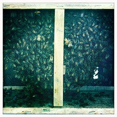 bulk bees