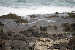 _MG_2678 (Anna Kipervaser) Tags: ocean beauty island hawaii peace oahu tranquility snorkeling pele monkseal