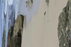 _MG_2533 (Anna Kipervaser) Tags: ocean beauty island hawaii peace oahu tranquility snorkeling pele monkseal