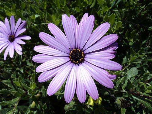 flowercoronadelmar