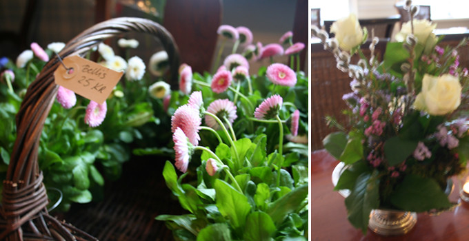 gröna växter 5