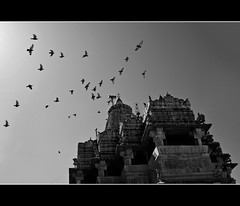 Let me fly.. (PNike (Prashanth Naik)) Tags: bw india lake building birds architecture temple flying nikon god pigeon flight arts culture holy blacknwhite rajasthan udaipur jagdish pnike