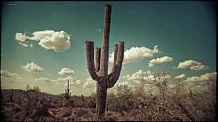 cactus 4557 (m.r. nelson) Tags: arizona cactus usa southwest cacti landscape flora desert az artphotography mrnelson markinaz nelsonaz