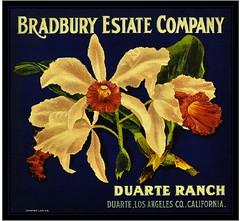 Duarte - Duarte Ranch (A SLICE IN TIME) Tags: orange fruit lemon box label grapefruit citrus crate fruitlabel cratelabel citruslabel orangecratelabel orangelabel lemonlabel