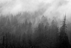 """I am not afraid of tomorrow, for I have seen yesterday and I love today"""" (©Helminadia Ranford) Tags: california trees fog landscape mood quote williamallenw"""